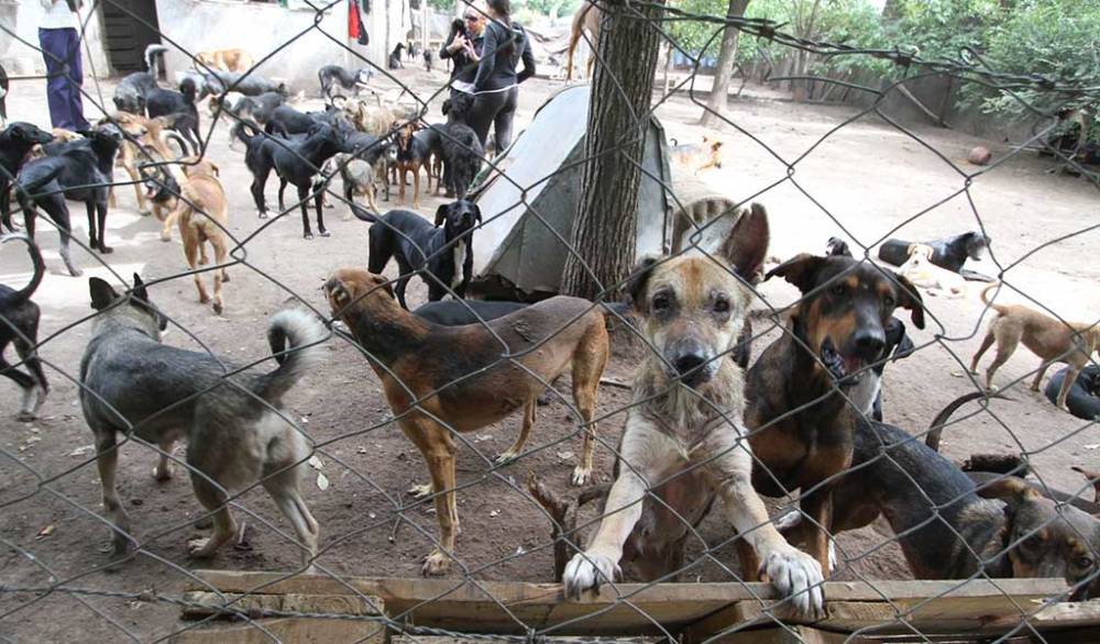 Warn canine overpopulation in Fresnillo - NTR Zacatecas .com 1